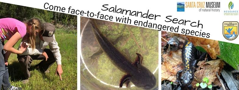 Salamander Search web