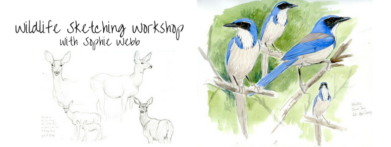wildlife-sketching-workshop