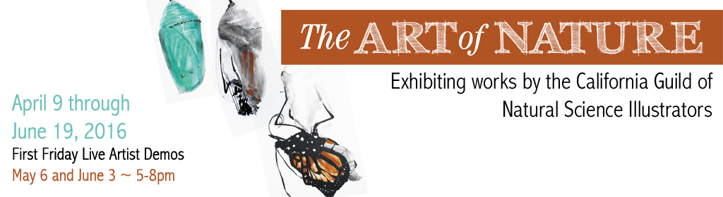 Art of Nature web banner