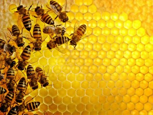 Bees clustered on a translucent honeycomb