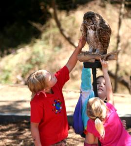Children examining a live raptor
