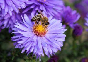 Bee on top of purple flower