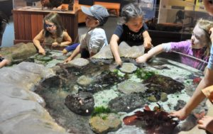 Group of children checking out the tidepool