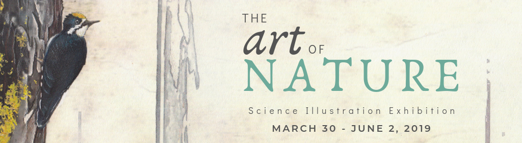 exhibit poster for The Art of Nature featuring a black backed woodpecker