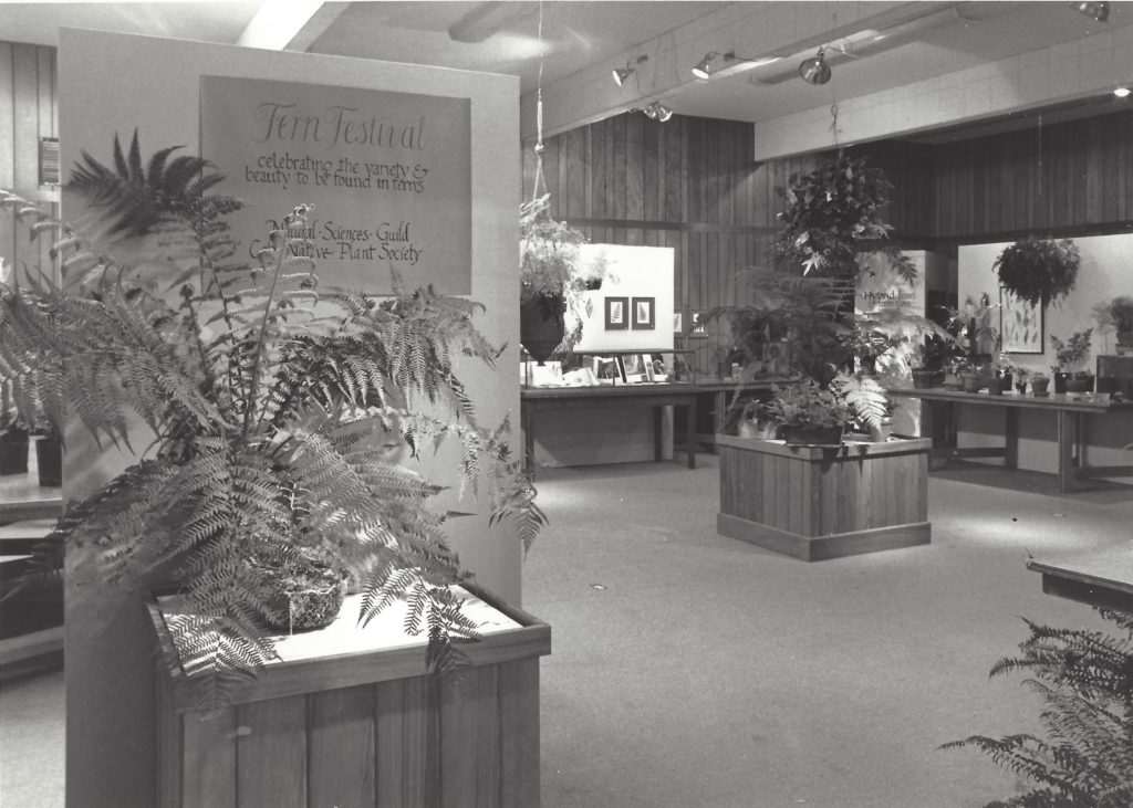 Fern festival at the museum in 1980