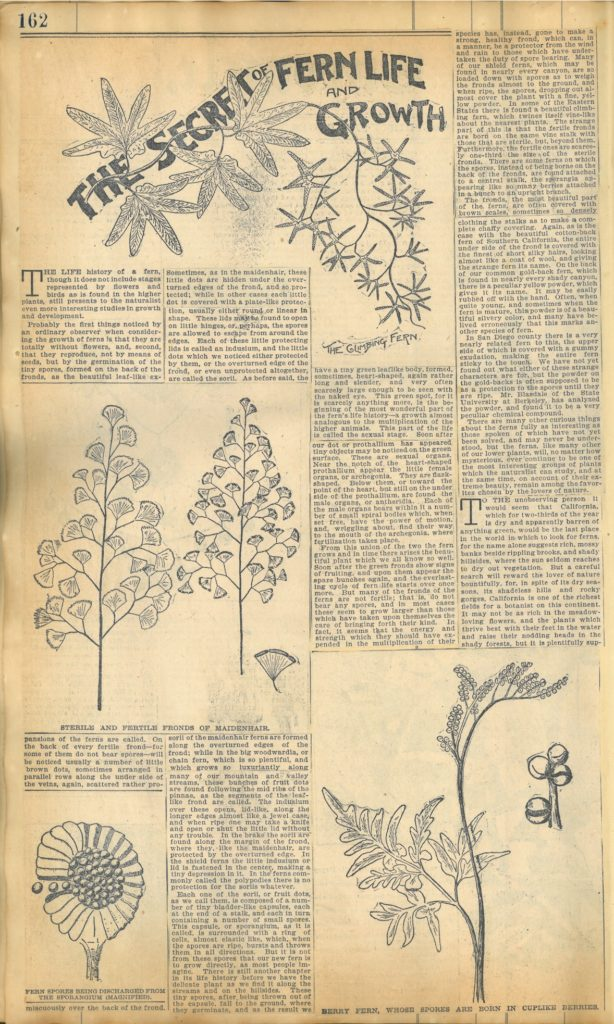 Clipping on the life and growth of ferns
