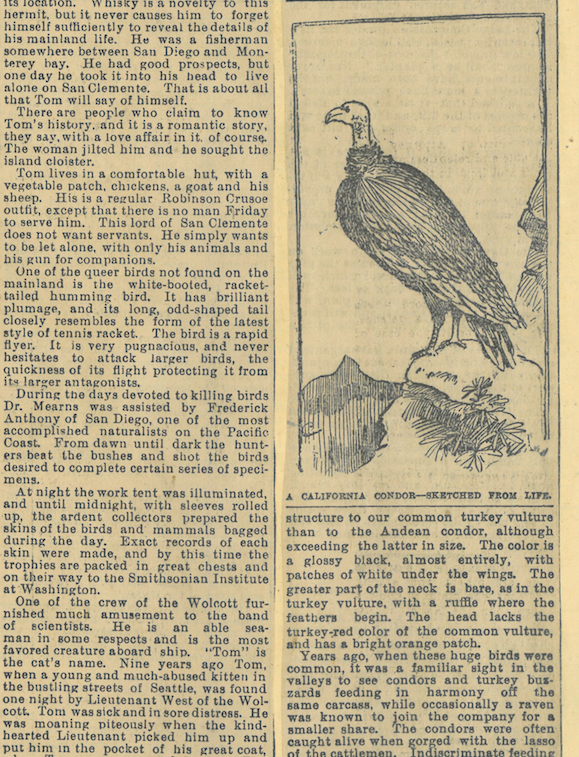 A newspaper clipping from 1894 describes the California condor's shrinking range, with an illustration depicting a condor looking out over a rocky outcrop.