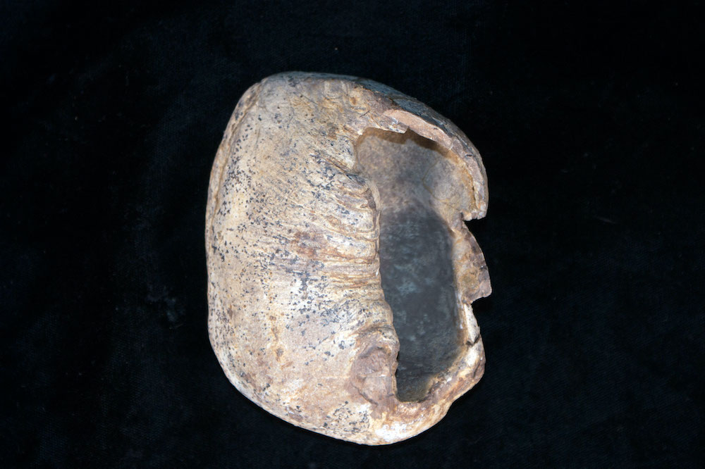 Whale ear bone
