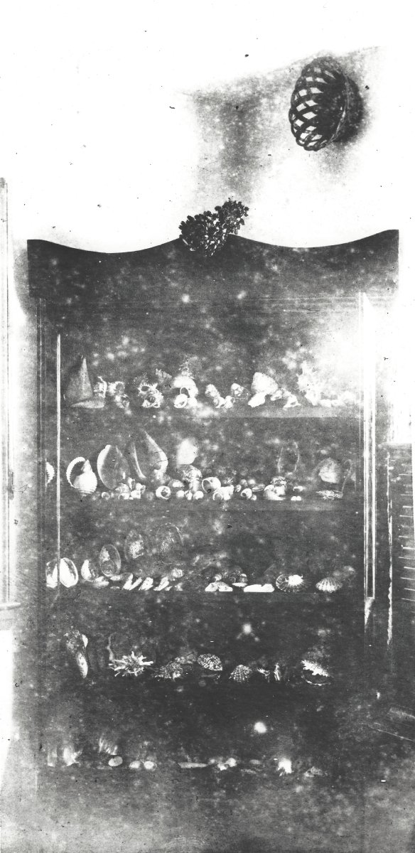 A black and white photograph of a cabinet filled with shells and other specimens.