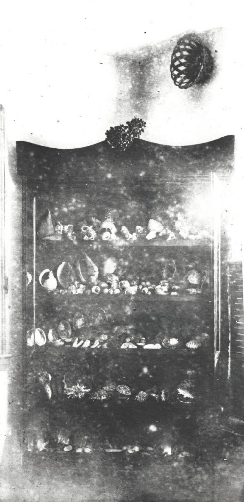 Laura's collection displayed in Santa Cruz Lighthouse, late 1800s