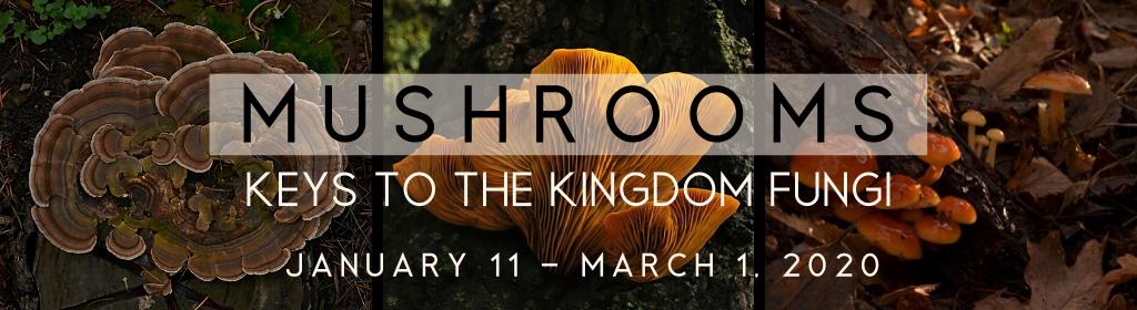 Mushrooms: Keys to the Kingdom Fungi