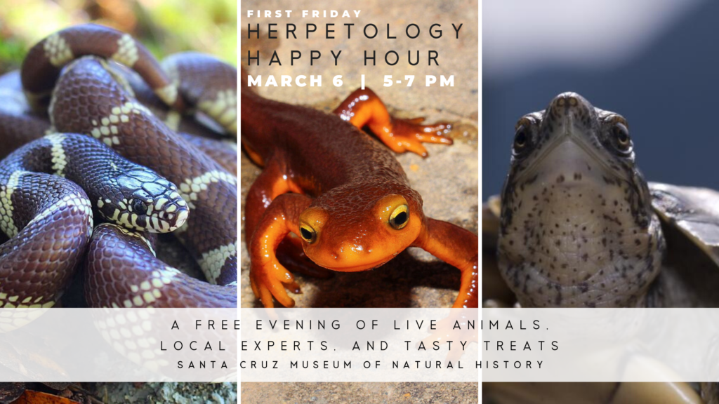 First Friday, Herpetology Happy Hour
