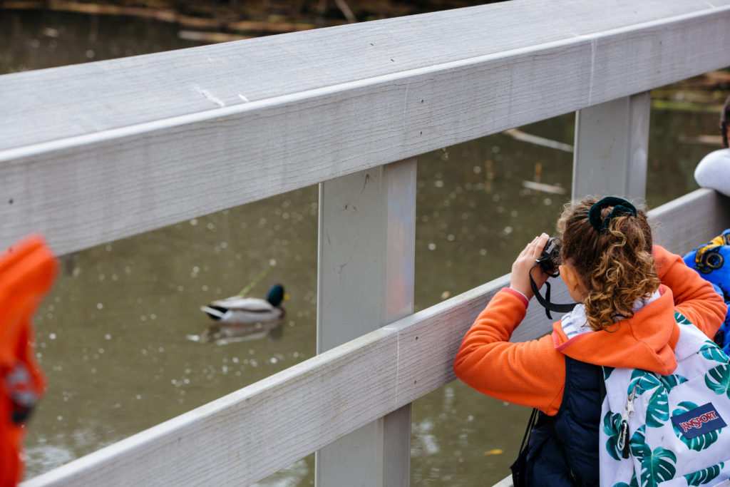 A student watching a mallard duck during a Museum-led field trip.