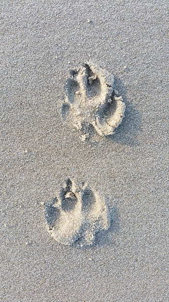 Dog tracks in sand