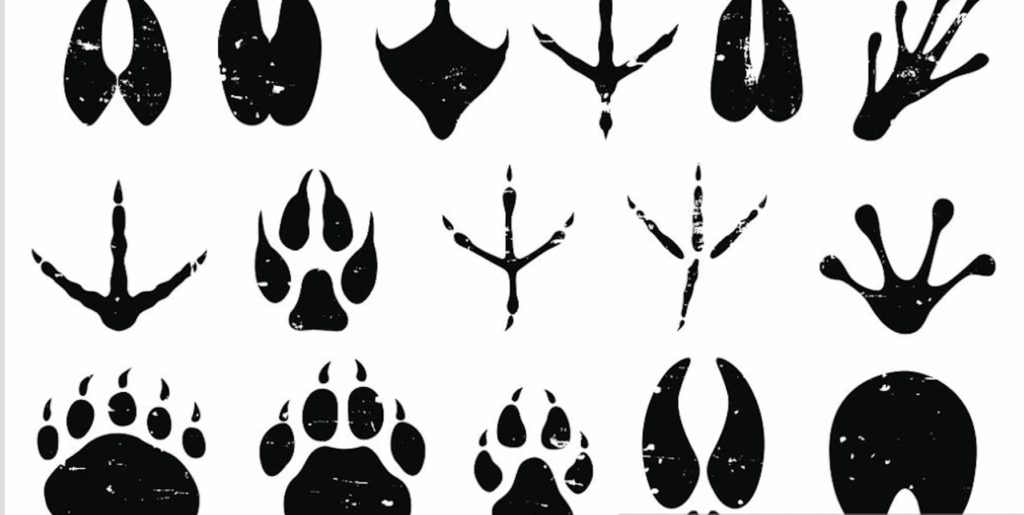 Animal footprints across several different classes