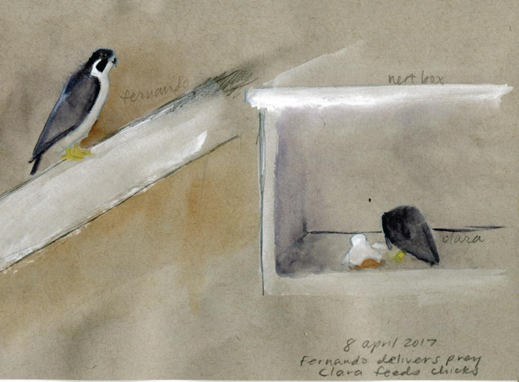 A watercolor of a bird of prey feeding a chick