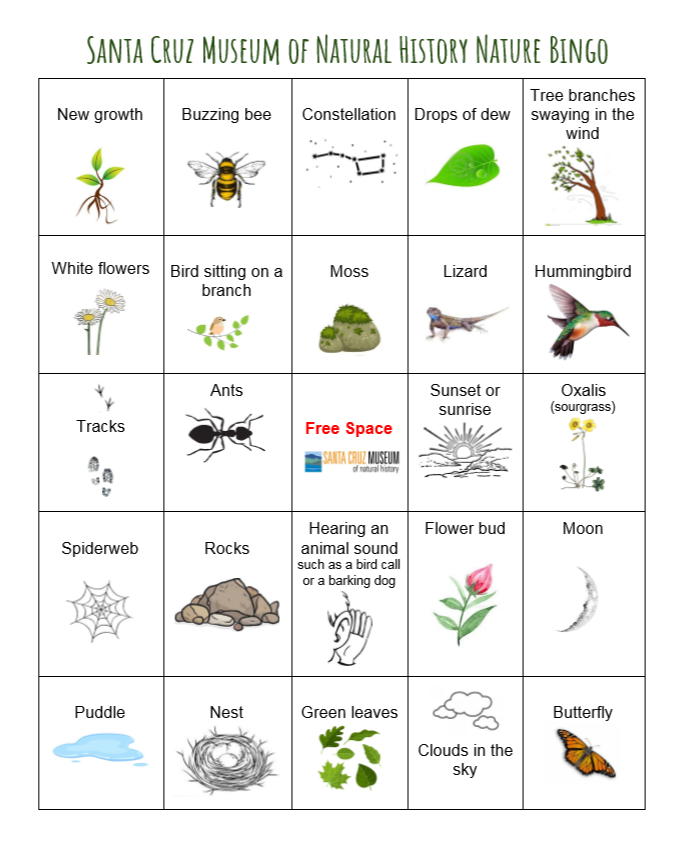 Santa Cruz Museum of Natural History Nature Bingo card