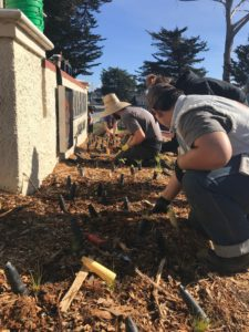 Ponderosa High students putting in native plants out front of the museum