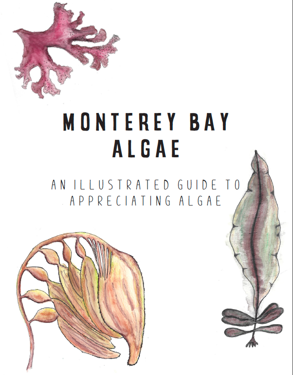 The front cover of Monterey Bay Algae: An Illustrated Guide to Appreciating Algae