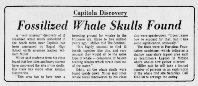 Newspaper article with headline Fossilized Whale Skulls Found