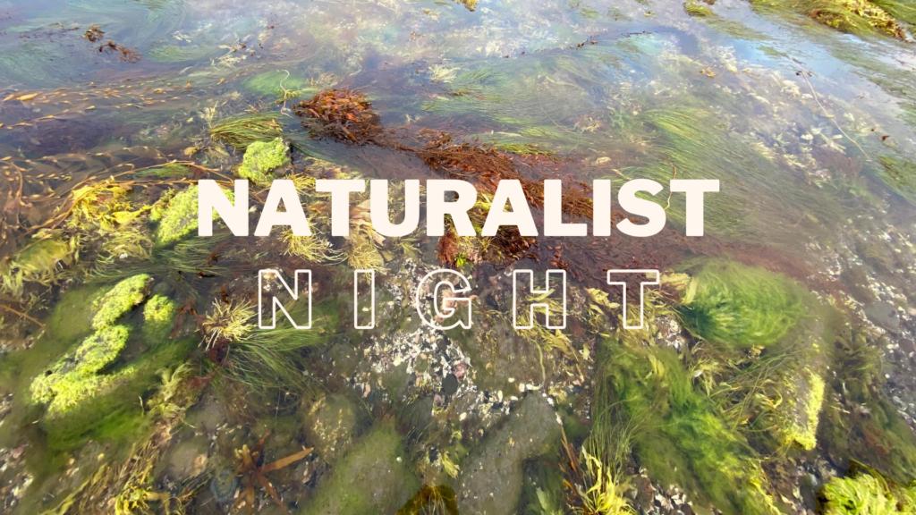 Naturalist Night: Intertidal ZOne