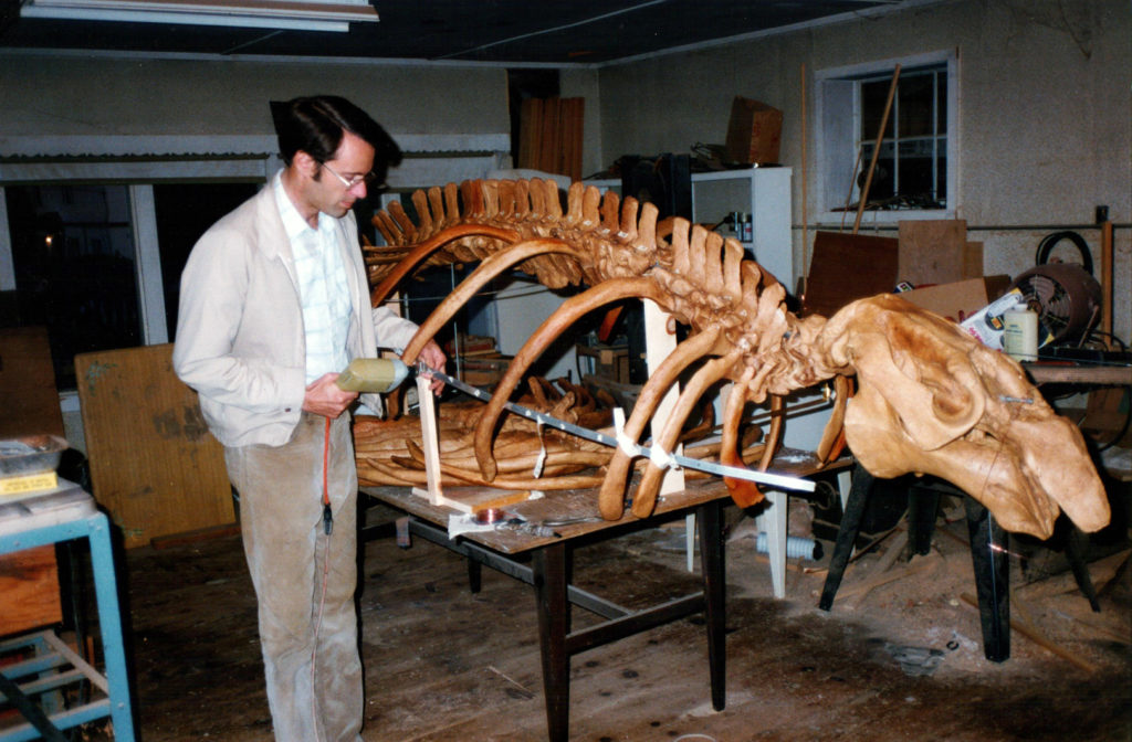 Frank Perry works on a cast of a fossil sea cow skeleton.
