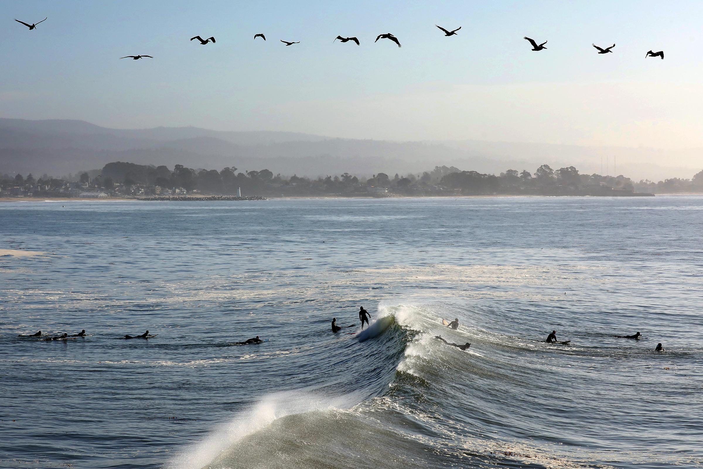 A squadron of pelicans wings northward as surfers paddle into the swell at Steamer Lane.