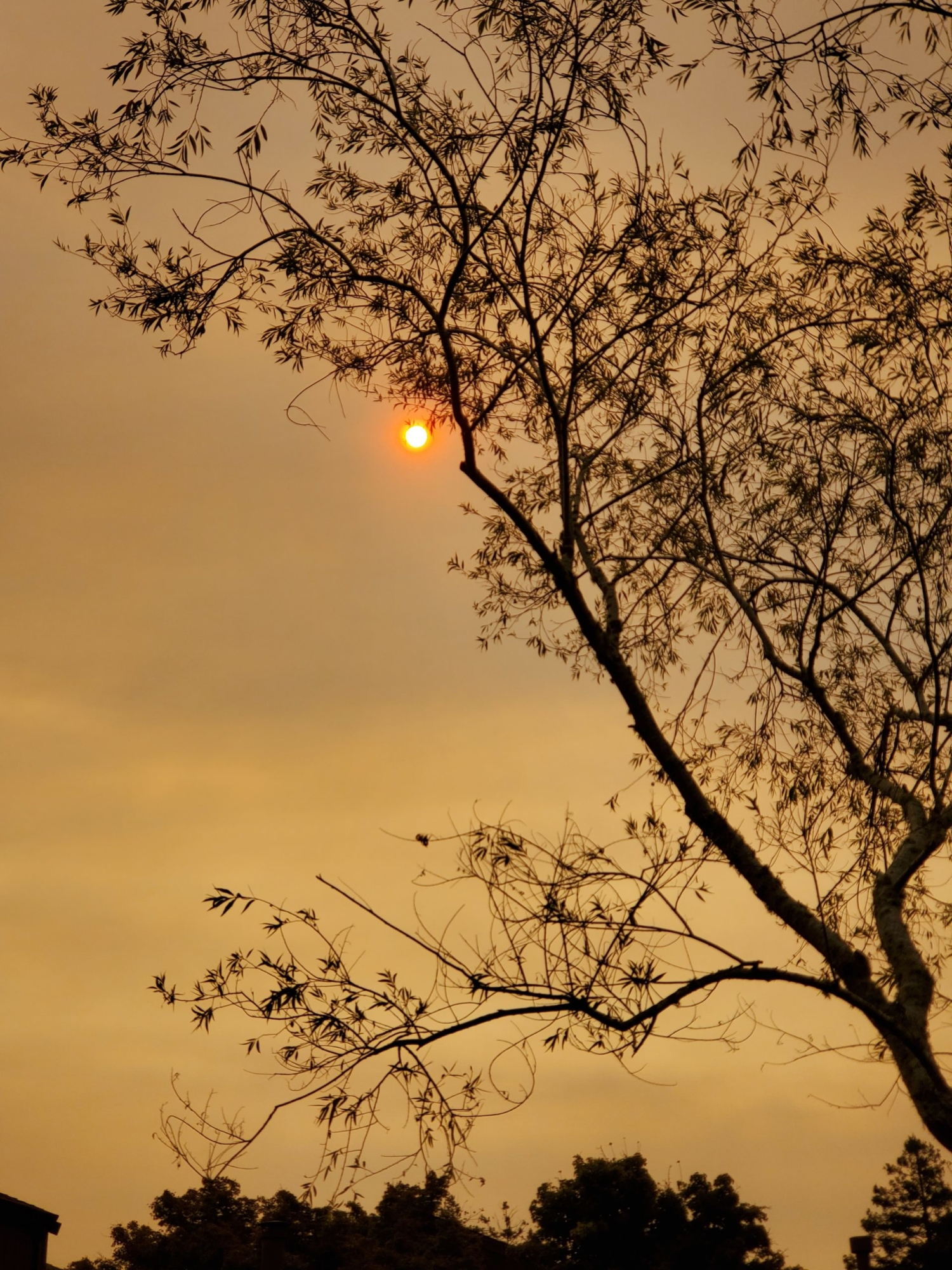 A small orange glow on a brown sky is slightly obscured by the silhouette of a reaching branch.