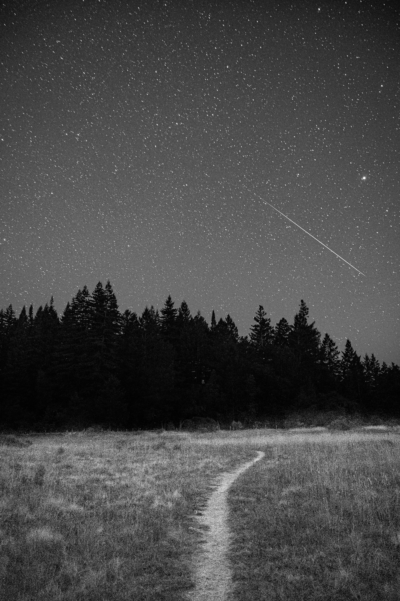 A black and white image of a meteor passing through the night sky over a path cutting through a field and lined with trees.