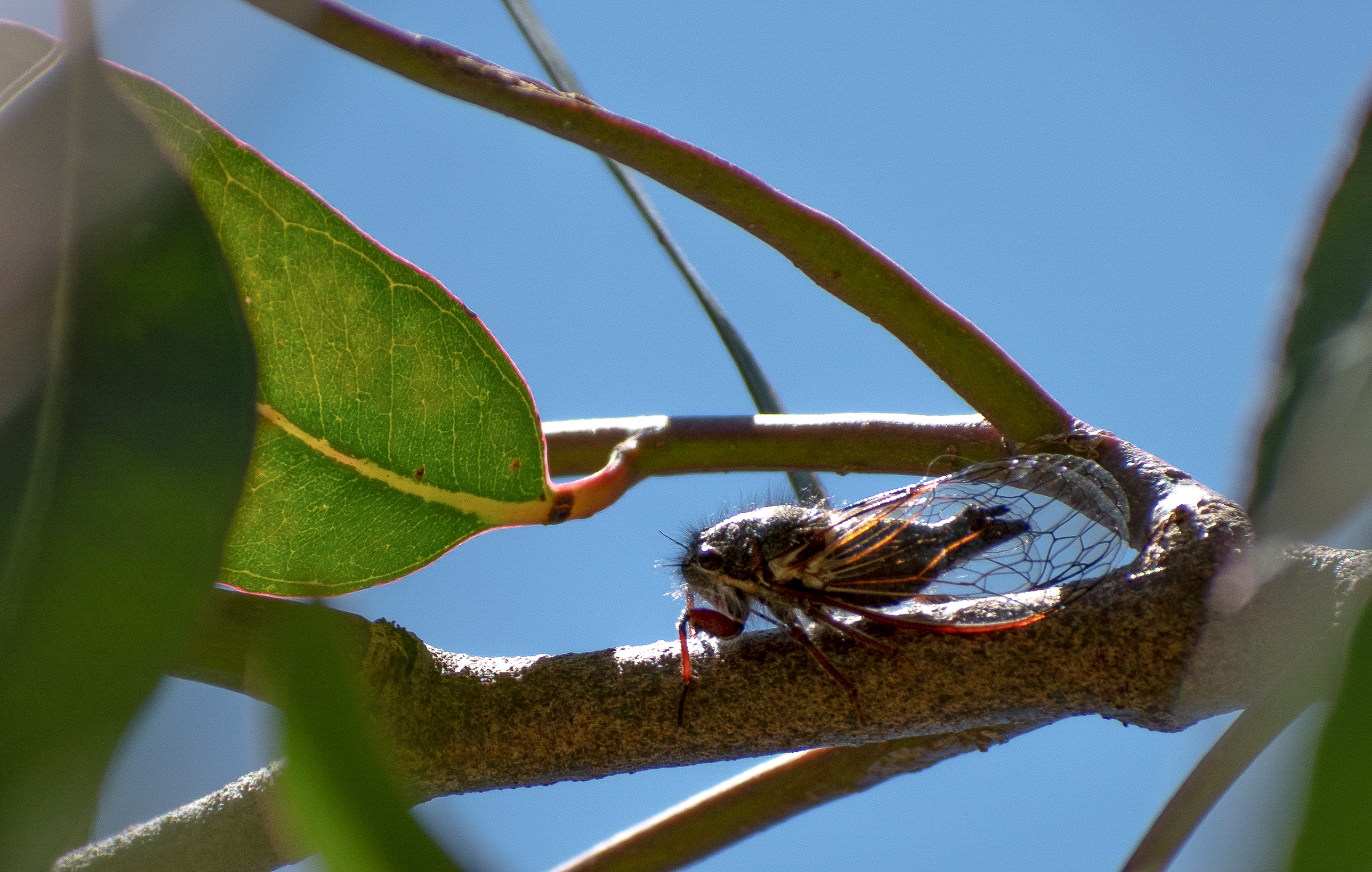 A large winged insect on a branch.