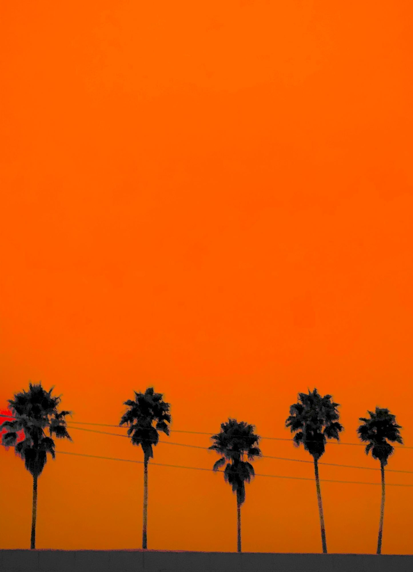 Black silhouettes of palm trees on a bright orange sky.