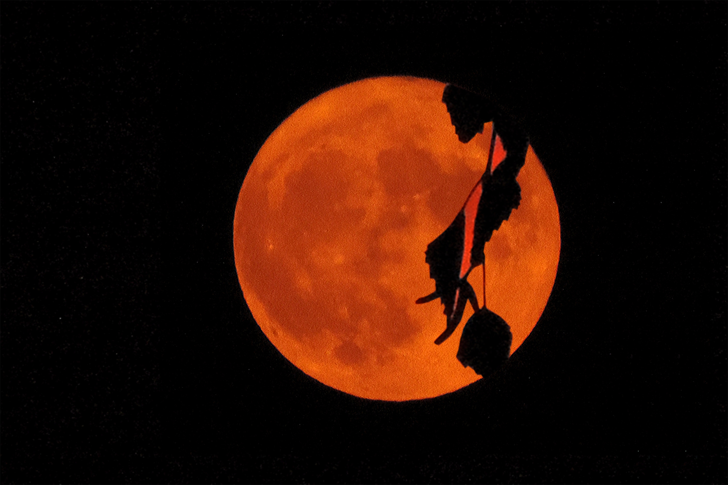 A red moon on a black sky is slightly obscured by the silhouette of dangling leaves.