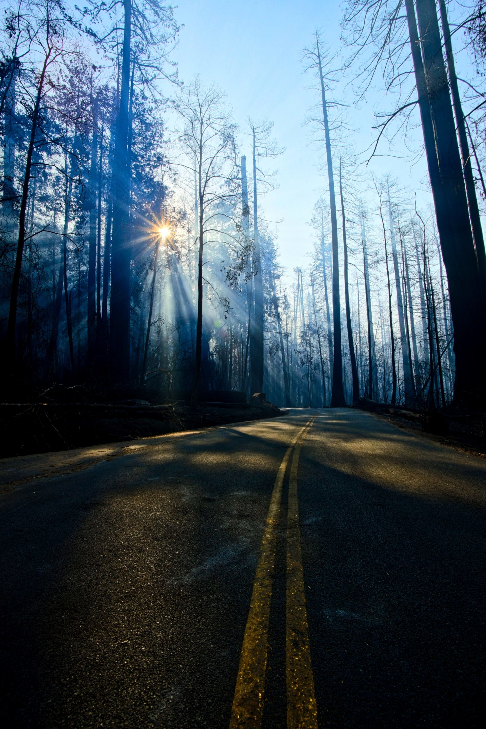 A road weaves through burned trees, with the sun shining through the smoky air, creating rays of white light.