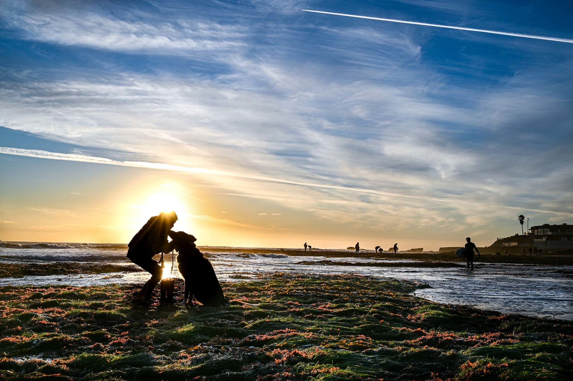 A person and dog are backlit by the setting sun at low tide in the the intertidal zone